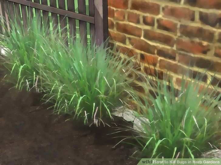 3 Ways To Kill Bugs In Herb Gardens Wikihow