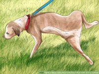 3 Ways to Stop a Dog from Urinating Inside After Going Outside