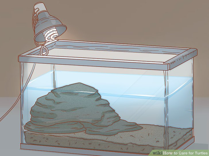 How To Care For Turtles With Pictures Wikihow