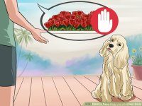 How to Keep Dogs out of Flower Beds: 12 Steps (with Pictures)