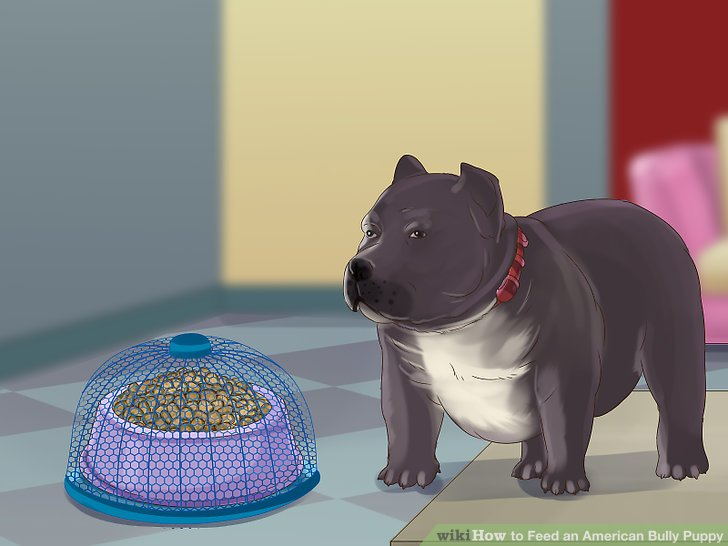 How to Feed an American Bully Puppy 7 Steps (with Pictures)