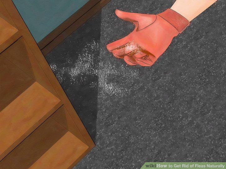 How To Get Rid Of Fleas Naturally 15 Steps With Pictures