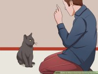 Stop Your Cat From Clawing Furniture - Best Furniture Produck