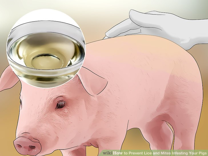 How to Prevent Lice and Mites Infesting Your Pigs 11 Steps