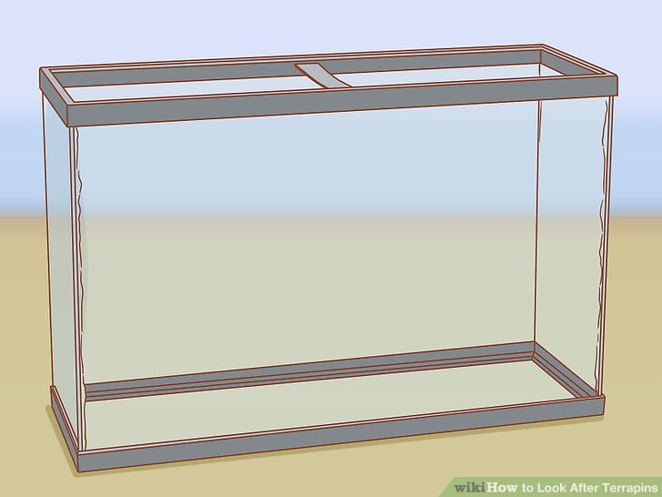 How to Look After Terrapins 9 Steps (with Pictures) - wikiHow