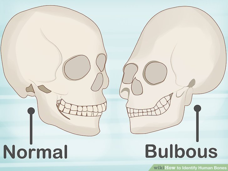 How to Identify Human Bones 15 Steps (with Pictures) - wikiHow