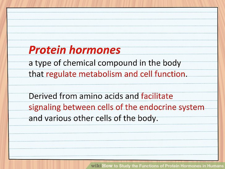 How to Study the Functions of Protein Hormones in Humans 11 Steps