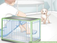 how to get your dog to sleep in the huffington post how to ...