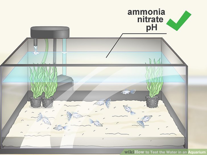 How to Test the Water in an Aquarium 12 Steps (with Pictures)