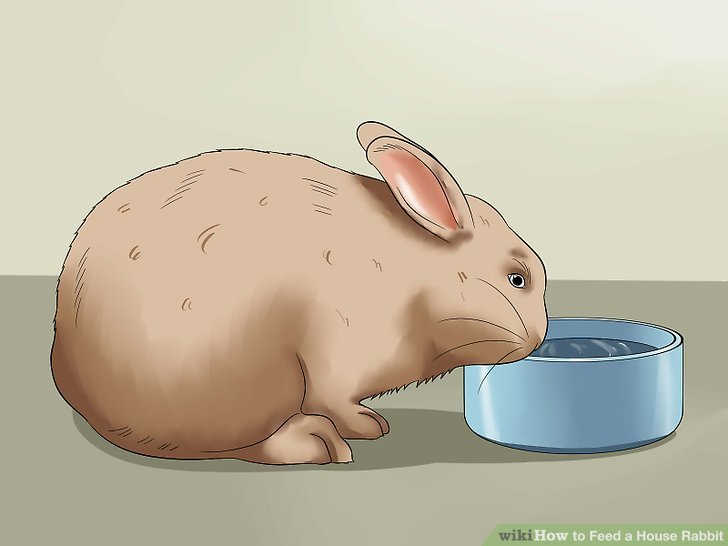 How to Feed a House Rabbit 10 Steps (with Pictures) - wikiHow