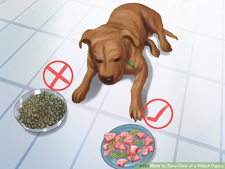 3 Ways to Take Care of a Pitbull Puppy - wikiHow