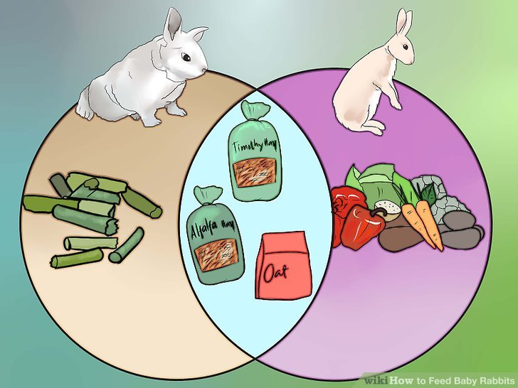 How to Feed Baby Rabbits 11 Steps (with Pictures) - wikiHow