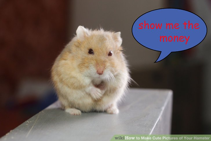 How to Make Cute Pictures of Your Hamster (with Pictures)