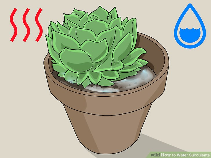 How to Water Succulents 8 Steps (with Pictures) - wikiHow