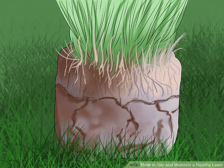 How to Get and Maintain a Healthy Lawn (with Pictures) - wikiHow