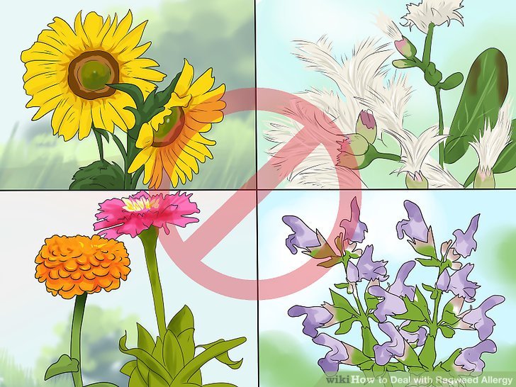 3 Ways to Deal with Ragweed Allergy - wikiHow