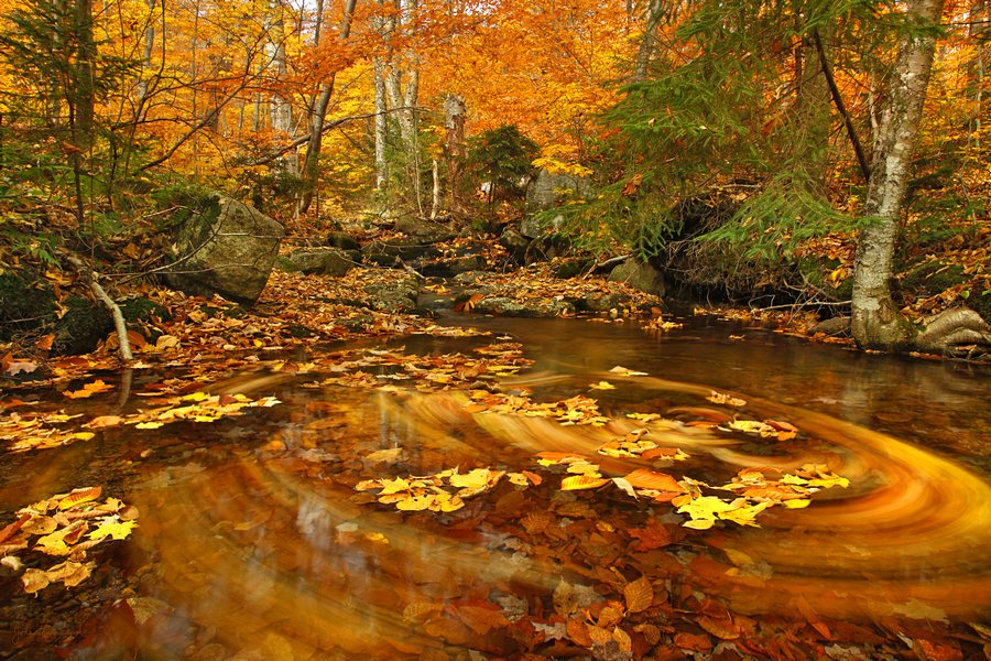 4k Central Park In The Fall Wallpaper Snowy Mountain Stream W Floating Leaves