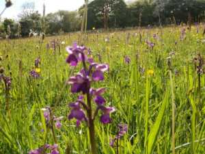 how to grow wildflowers in grass