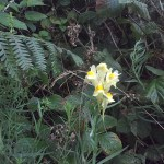 Wild flower gardening ideas
