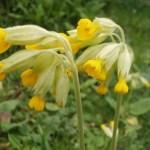 Wildflower Lawn Seed