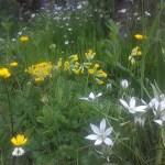 Wildflower combinations