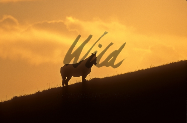 Fall Hills Wallpaper Wild Images Wild Horses In Packs With Young Feeding