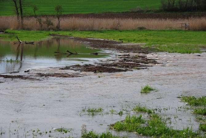 Wiesenüberschwemmung©Dr. Groß