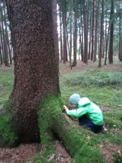 Bäume werden ertastet...