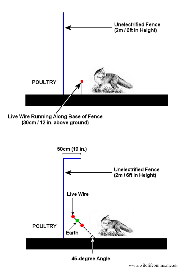 electric fencing for foxes