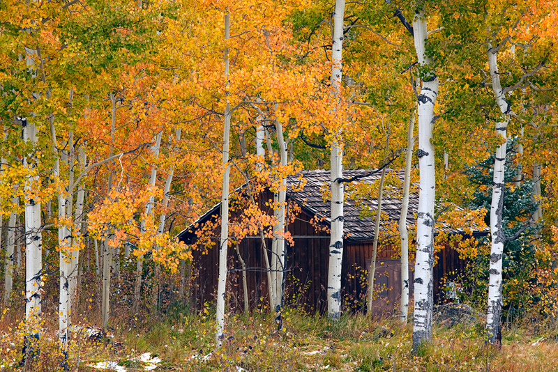 Wallpaper For Fall And Autumn Seasonal Solitude Uncompahgre National Forest Colorado
