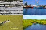 THE Coastal Eco Tour