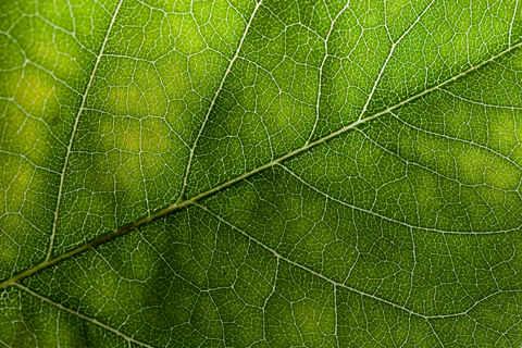 Weed Wallpaper Iphone Free Leaf Textures Wild Textures