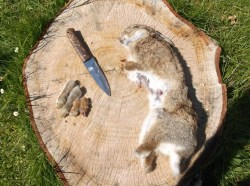 Small Of How To Butcher A Rabbit