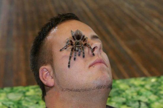 Lebenden Riesen Spinnen und Insekten Ausstellung