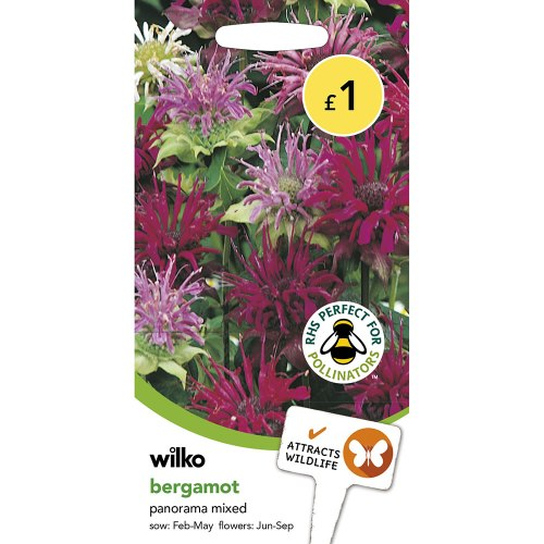 Medium Of Bee Balm Seeds
