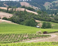 Anderson valley and winery