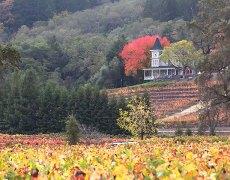 fall colors st. helena