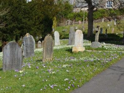 Dulverton Churchyard in Spring