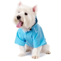 How to Buy Your Lovely Dog Charming and Healthy Clothes ...