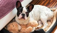 Dogs Scratching Behavior at Their Beds | WishForPets