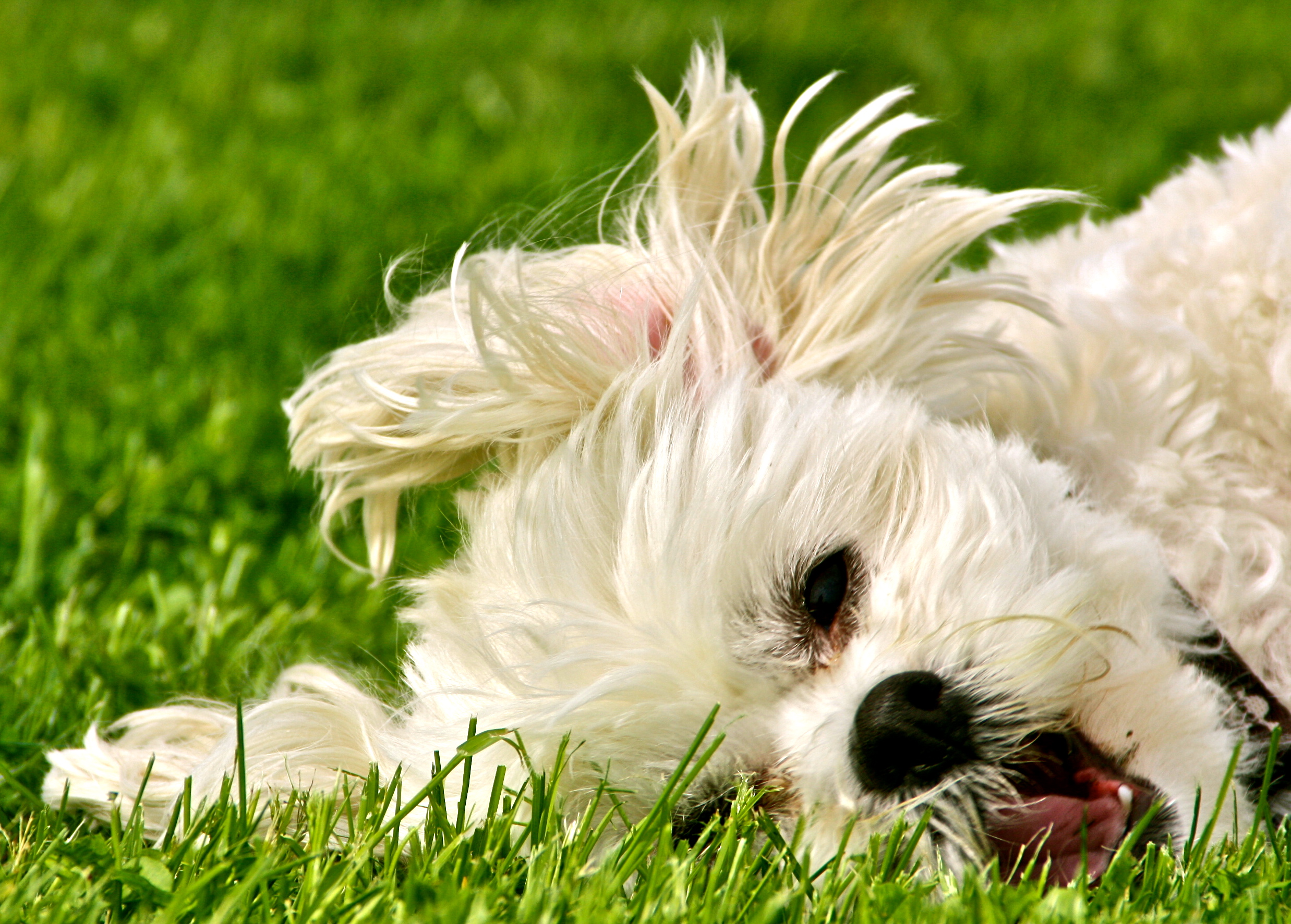 Wallpaper Quotes Diarrhea Spring Dog Safety Tips Wishforpets