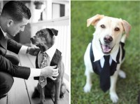 Dogs Dress in Suits to be Gentlemen | WishForPets