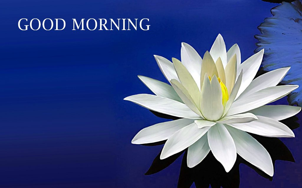 Best Gujarati Quotes Wallpaper Good Morning With Amazing Lotus