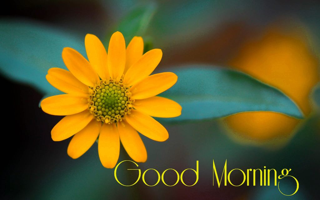 Happy Mood Quotes Wallpapers Good Morning Wishes With Flowers Pictures Images Page 71
