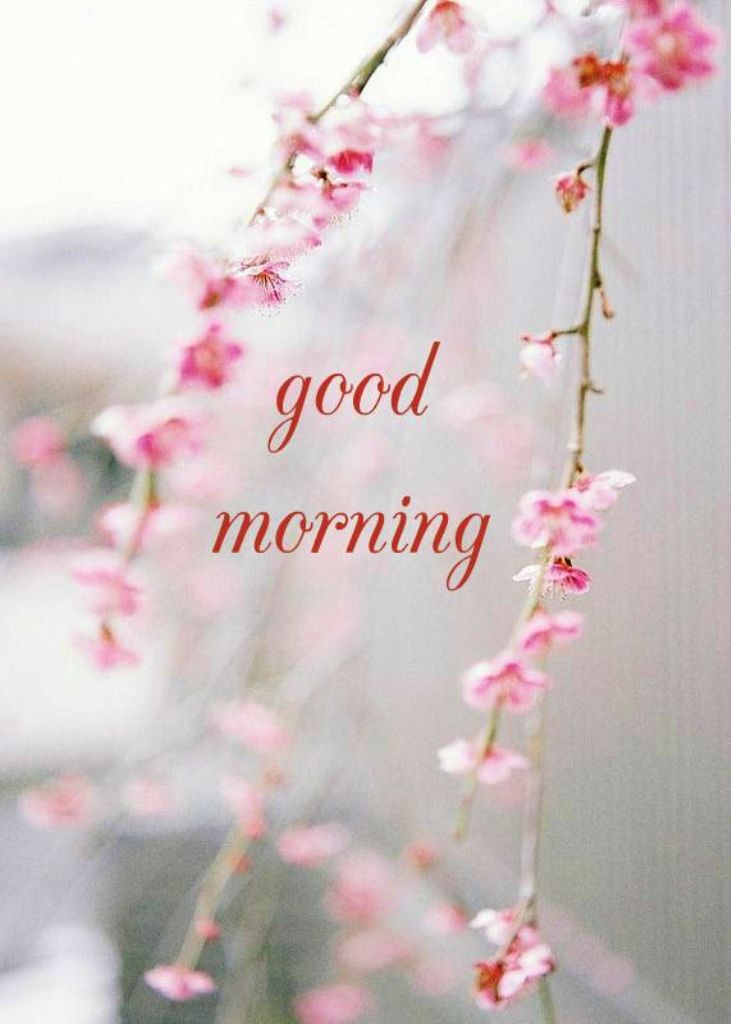 Iphone Wallpaper Pinterest Quotes Good Morning Wishes With Flowers Pictures Images Page 45