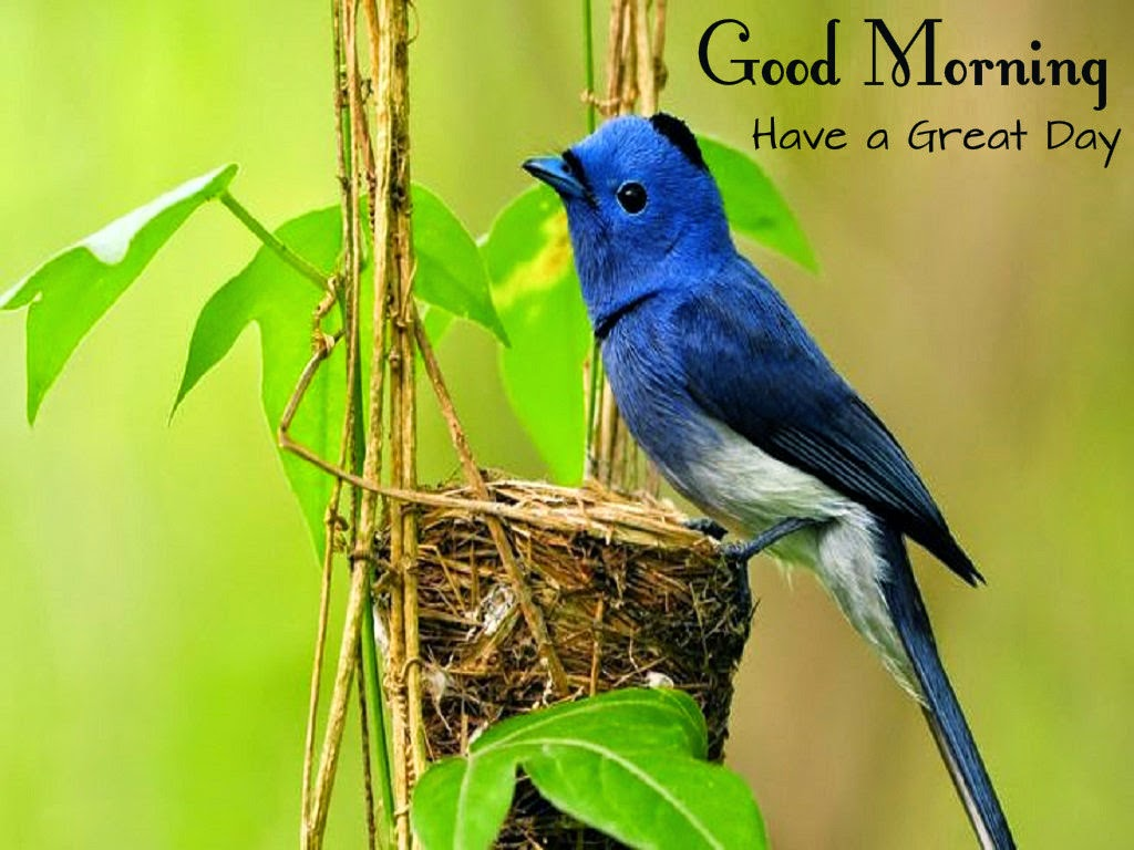 Good Morning Beautiful Wallpapers With Quotes Good Morning Wishes With Birds Pictures Images