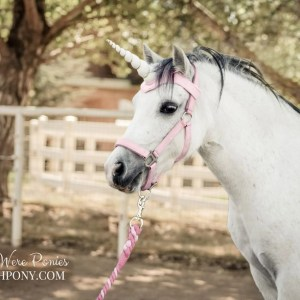 WishPony Unicorn Horn Browband