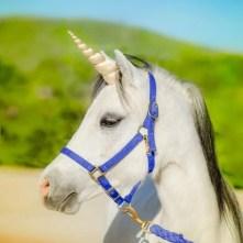 Unicorn Horn for Horse Pony