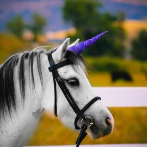 Purple Unicorn Horn for Pony/Horse