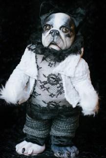 Boston Terrier Doll